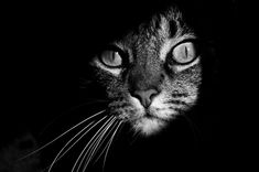 The mysterious lives of cats, captured.  http://www.boredpanda.com/black-and-white-cat-photography/