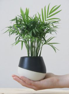 Ceramic planter in white with black matte glaze. modern and urban look. Beautiful addition to the modern home. Great as an air plant holder,wall planter,succulent planter,cactus planter. The planter made in slip casting technique. Each planter is treated separately and burned to high temperature.  approximate size: 8 cm diameter x 9.5 cm tall. (3.4 x 3.7)  * NOTE- The product does not include the plant.   I do not recommend putting them in the microwave, oven and dishwasher, handle with…