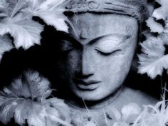 Meditation: Loving This Life - Happiness (Lovingkindness Practice) min) - Tara Brach Buddhist Meditation, Meditation Music, Guided Meditation, Buddhist Retreat, Meditation Videos, Meditation Quotes, Mindfulness Meditation, Gautama Buddha, Osho