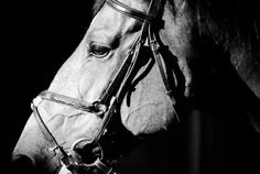 I love black and white photos of horses, especially profiles.