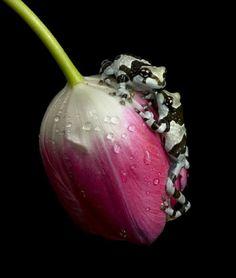 "llbwwb: "" Milk frogs on flower ny Noname """