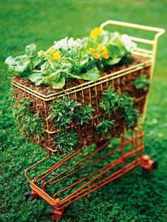A vegetable garden in a shopping cart. Everything about this is brilliant: a moveable-feast* (portability to follow the sun), repurposed object, vegetable garden, good drainage, built-in fence to protect against rabbits.