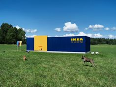 IKEA Launches New Line For Your Furry Best Friends — Cheap Thrills