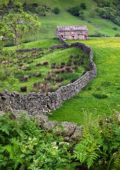 England. A typical Yorkshire Dales scene with its buttercup filled hay meadows, dry stone walls and field barns