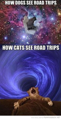 Car rides - dogs vs. cats