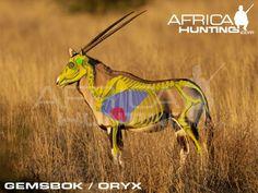 Grands gibiers africains - Le blog de Alex.bowhunter Africa Hunting, Impala, Moose, Elephant, Animals, Badger, Dog, Game, Africans