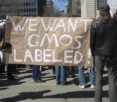 (Healingtalks) Because federal laws do not require genetically messed-up food to be labeled,  14 states are debating whether to legally require such labeling.  The debate is taking place from NY to California, as legislators consider the impact of also the first genetically messed-up animal (salmon) for our dinner plates