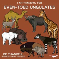 I Am Thankful For Even-Toed Ungulates by PepomintNarwhal Animals Of The World, Animals And Pets, Baby Animals, Fun Facts About Animals, Animal Facts, Curious Creatures, Wild Creatures, Animal Posters, Animal Species