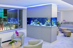 Waiting room aquarium- would love for it to be in the wall so the waiting room has one side, activity room has the other. Dream big right?