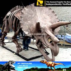 DS-045 Museum Dinosaur Fossil Triceratops