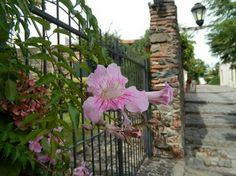 Flor roxa em Colonia del Sacramento, Uruguai