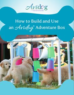 Avidog puppy adventure box offers a world of interactive exploration. A fun activity to introduce your next litter to a world of sights, sounds, touch & motion! Whelping Puppies, Whelping Box, Dog Kennels, Rottweiler Puppies, Toy Puppies, Toy Dogs, Diy Dog Toys, Pet Toys, Yorkies
