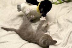 gato com pinguim de pelúcia