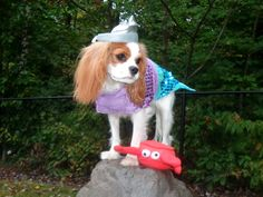 Fall Fido Fun ! #cute #dog in #nature during the #fall season  ! #woof!