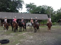 Santo Horses, a GREAT place to visit when in Santo, Vanuatu.  HIGHLY recommended.   The lady who owns and runs this business has rescued many horses.She has a great heart for horses