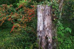 京都フォト通信: 切り株 Kyōto Botanical Garden, Sakyō-ku, Kyōto Fujifilm Finepix X100 京都府立植物園(京都市左京区下鴨半木町)
