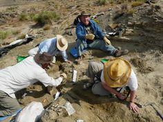 Tate Geological Museum 125 College Dr. Casper, Wyoming 82601 (307) 268-2100 http://www.caspercollege.edu/tate/