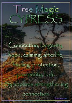 CYPRESS Connection, longevity, hope, calming, afterlife, healing, protection, prosperity, luck. Symbolises strengthening connection