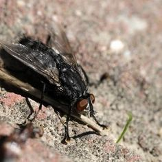 Homemade Fly Killer thumbnail- dont know about killer but it repelled well