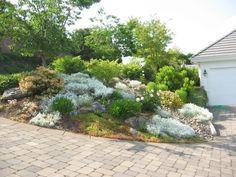 jardin de rocaille avec des arbustes et arbres
