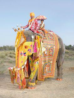 Elefantes de la India. El desfile de los elefantes pintados. · Cafetería · Cafetería · wocial
