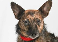 Adopt Kinley, a lovely 2 years 6 months Dog available for adoption at…
