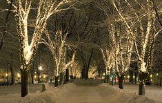 A winter wonderland/ Un maravilloso paisaje nevado.