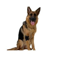 L'artrite canina, conosciuta anche come osteoartrite canina oppure OA, è identificabile con la distruzione della parte cartilaginea che riveste le ossa delle articolazioni dell'animale. La membrana che protegge la parte è soggetta a deterioramento a causa dell'età, oppure conseguente al troppo movimento e sport. I cani più predisposti per l'artrite sono gli esemplari anziani, quelli particolarmente esuberanti e sportivi, oppure razze specifiche come Bulldog o Labrador. Spesso cani con…