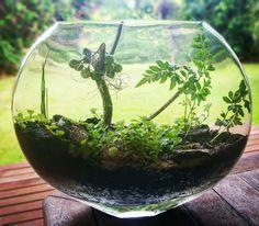 My first DIY terrarium.