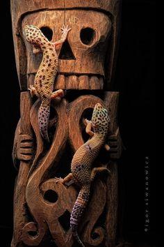 art +leopard geckos = this