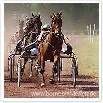 Trabrennen  - Nationalsport auf Bornholm