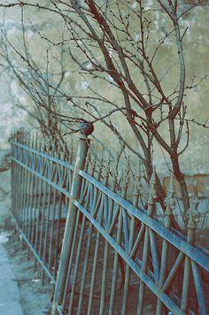Photos by Ilona Olkonen. Saint-Petersburg, Russia.