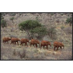 "East Urban Home 'African Elephant Young Orphans' Framed Photographic Print on Canvas Size: 24"" H x 36"" W x 1.5"" D"