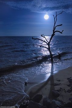 Moon over the ocean. the ocean is a beautiful thing at night. Beautiful Moon, Beautiful World, Beautiful Places, Beautiful Flowers, Ciel Nocturne, Nature Landscape, Shoot The Moon, Moon Pictures, Night Skies