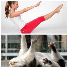 #yogacats #ilovecat #ilovecats #kitten #kitty #instacat #catstagram #catsofinstagram #meowmeow #meow #welovecats #caturdaymornings #cutecatcrew #yoga #yogaeverydamnday #yogalove #yogaeverywhere  #yogaholic #yogaanywhere #yogaeveryday #yogapose #yogainspiration #yogapractice #yogalife #yogi #iloveyoga #myyogalife #igyoga #yogajunkie #instayoga by yoga.cats