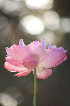 flower | flowers | Bahman Farzad | Flickr