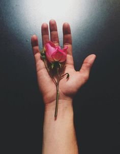 """""""But he who dares not grasp the thorn, should never crave the rose."""" -Anne Brontë (Connor Franta's instagram photo)"""
