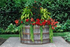 Wine barrel container with great plant combo