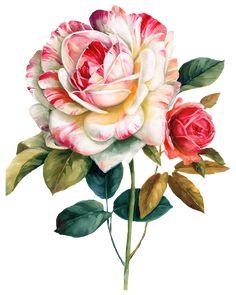 decoupage flower, flower painting, flower painting png, flower pattern, flower png, flowers, lisa audit flower png, lisa audit png, lisa audit png flower, painting, png, png flower, flowers, painting,