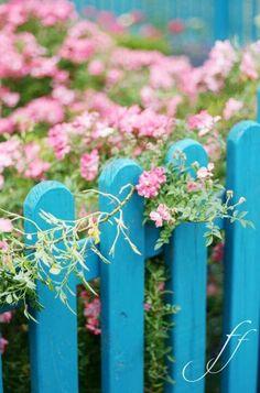 #turquoise fence