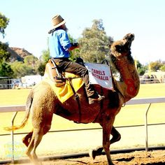 Alice Spings, Australia. Camel Cup  #Camelracing #camelcup #camel Travel Sights, Camel, Road Trip, Scenery, Racing, Australia, Travelling, Alice, Events