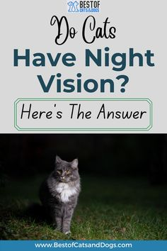Night Vision In Cats. The Truth Is That Cats Cannot See In Absolute Darkness Any More Than We Can. However, They Are Much Better Adapted Than Humans For Seeing In Low Levels Of Light. Read More Here! #CatNightVision #NightVisionInCats #CatTips