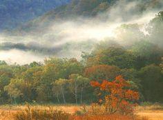 가을의 안개의 숲속에서..
