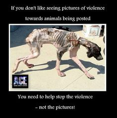 (14) Animal Cruelty Exposed To Help Stop Animal Abuse You Have To Get Felony Animal Abuse Laws To Work Everywhere Around The World as Animal Abusers Become Child Murderers. If You Know Of Animal or Child Abuse Call and Report it Now To 911. Be The Solution and Speak Up Now