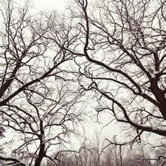 arbre sans feuille - Ecosia