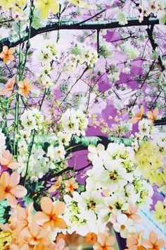 Flowers on flowers on flowers