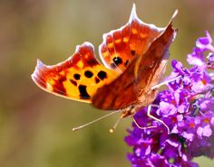 Butterfly Photography  Digital Download for by NaturesHomeDecorArt