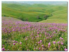 Desert Wildflower report Southern California by DesertUSA