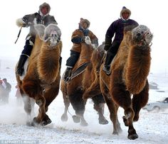 Mongolian tribesmen take part in a camel race during a winter Naadam festival in Hulun Buir, north China's Inner Mongolia region
