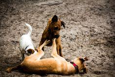Aufnahme von spielenden Hunden am Grunewaldsee in Berlin